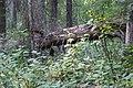 Wapta Falls Trail IMG 4939.JPG