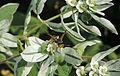 Wasp flowers.jpg