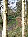 Wealden Bridleway - geograph.org.uk - 303068.jpg