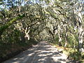 Wescott Road (Edisto Island) 2.JPG