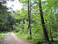 West Street, Federated Women's Club State Forest, Petersham MA.jpg