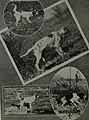 Western field (1905) (14798600103).jpg