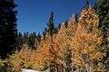 Weston Pass Road (5106137745).jpg