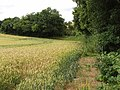 Wheat field by Warmscombe Lane, near Bix Bottom - geograph.org.uk - 886752.jpg