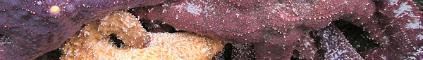 Wikivoyage page banner sea stars.jpg