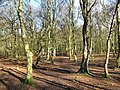 Winter woodland - geograph.org.uk - 1703372.jpg