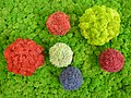 With modern technics a great pallet of colors can be achieved for decoration purposes for reindeer moss..jpg