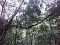 Wonderful scenery in Sinharaja Rain Forest.jpg