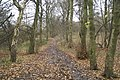 Woodland walk in Rayner Park, Danes Valley - geograph.org.uk - 1061273.jpg