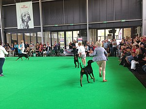 World Dog Show, Amsterdam, 2018 - 15.JPG