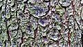 Ziemia Kłodzka 13 - panoramio.jpg