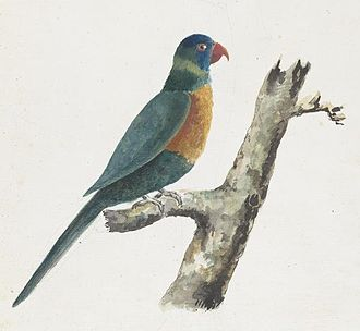 Adrien Taunay the Younger - Image: 'Green Parrot', watercolor painting by Adrien Taunay the younger, c. 1819, National Library of Australia