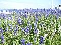 (千葉県) 海ほたるPA。アクアラインの道中にあるPAで、ここでのUターンも可能。晴れた日は東京湾を往来する船を多数眺めることができる。 - panoramio.jpg