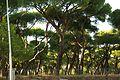® S.D. (ES,EN.) MADRID AVENIDA DE PORTUGAL PINAR - panoramio (2).jpg