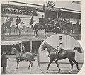 Épreuve-chevaux-de-selle-concours-hippique-international-JO1900.jpg