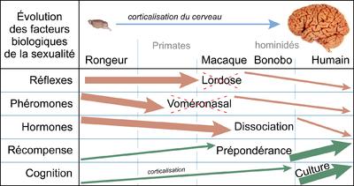 radiocarbone datant résultats fictifs avec des coquilles de mollusque