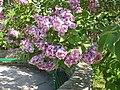 Ботанічний сад ім. М.Гришка IMG 6998.jpg