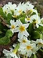 Весна в ботаническом саду СПбГЛТУ.jpg