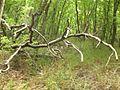 Дървета.jpg
