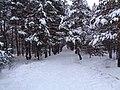 Зимняя дорога в лесу.jpg