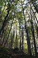 Лісовий заказник Темнатик.jpg
