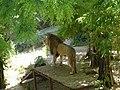 Миколаївський зоопарк, червень 02.jpg