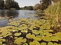 Найчистіша річка Сумської області в межах Гетьманського національного природного парку.jpg