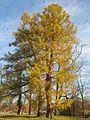 Ораниенбаум, Верхний парк01.jpg