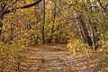 Осенняя дорога - panoramio (4).jpg