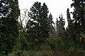 Сирецький дендрологічний парк 02.jpg