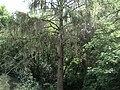 Устимівський дендропарк налічує понад 12 тисяч різних дерев і кущів.JPG