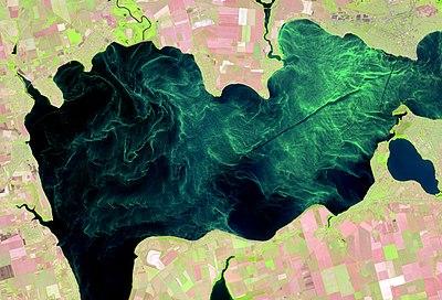 Явище «цвітіння води» на прикладі Каховського водосховища.jpg