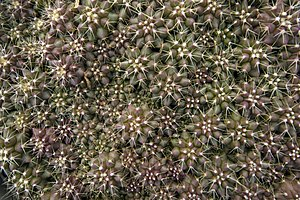 گونه های کاکتوس در گلخانه دنیای خار در قم 07.jpg