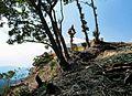 「山さきもり」 - panoramio.jpg