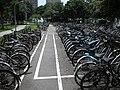 國立臺灣大學自行車停車格 20080819.jpg