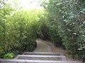 绿博园中小路 - panoramio.jpg