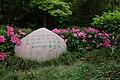 芍药花 Peony flower - panoramio.jpg
