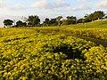 虎頭山環保公園 Hutoushan Greens Park - panoramio (1).jpg