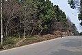 马鞍山森林公园 - panoramio (23).jpg