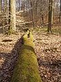 05-04-03-plagefenn-by-RalfR-07.jpg