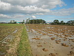 09461jfRoads Paddy fields Domesticated ducks Paligui Candaba Pampangafvf 03.JPG