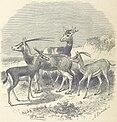 146 of 'Le Désert et le Monde Sauvage ... Illustrations par Yan' D'argent, etc' (11241485136).jpg