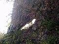 162-BPorticina dei Crottoni 07 10 17 011.jpg