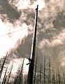 1939. Rigging the spar tree. Smith operation. Tillamook Burn, Oregon. (33891049921).jpg