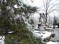 20. Bucuresti, Romania. Din Ciclul BUCURESTIUL SUB ASEDIUL FRIGULUI, Ianuarie 2019. (Si Bradutul mi s-a plecat la picioare, de atata gheata).jpg