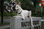 2008-06-26 White German Shepherd Dog Posing 1.jpg