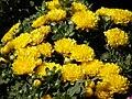 2010. Выставка цветов в Донецке на день города 104.jpg