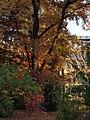 2011-10-26-172919 49,415185, 8,667106.JPG - panoramio.jpg