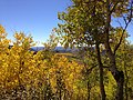2014-10-04 13 32 53 View of Aspens during autumn leaf coloration from Charleston-Jarbidge Road (Elko County Route 748) in Copper Basin about 8.7 miles north of Charleston, Nevada.jpg