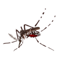 201410 mosquito.png